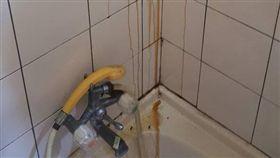 浴室,天花板,蜜蜂,蜂蜜 圖/翻攝自報廢公社