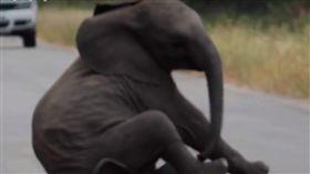 耍任性,小象,母親,大象,象鼻,聰明,屁孩,規勸,路邊,耍賴 圖/翻攝自YouTube https://goo.gl/obrRbV