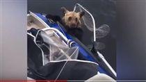 小熊湖中漂浮 漁夫用漁網打撈救起