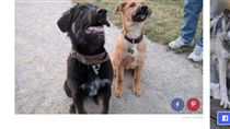 散步到一半突然反常飛奔,原來狗狗認出了自己的同胞兄弟。(圖/翻攝自《The dodo》)