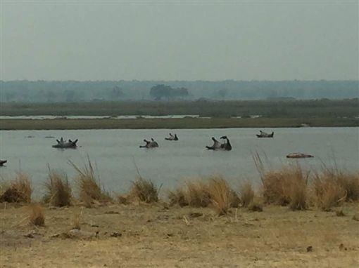 非洲納米比亞,巴布瓦塔國家公園,河馬,死亡,屍體(圖/翻攝自推特)