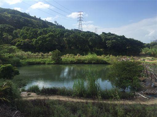 潘男發現這處池塘後一時技癢揮竿釣魚。(圖/翻攝畫面)