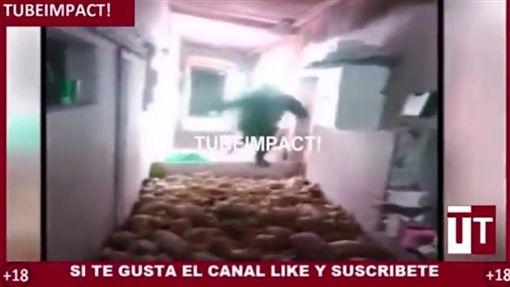 西班牙,農工,重壓小豬(圖/翻攝自YouTube)