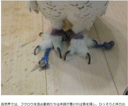 貓頭鷹咖啡店 圖/《現代ビジネス》、YouTube
