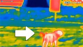在熱像儀中的狗狗身上,特製放屁效果。(圖/翻攝自Banana Factory臉書)