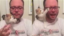 寵物,貓,喵星人,貓貓拳,貪吃,貓咪,打人(圖/翻攝自臉書)