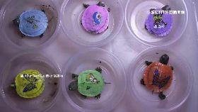 彩繪殼傷龜1800