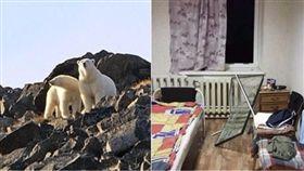北極熊,俄羅斯,戰鬥民族,外出,海象,動保人員,北極 圖/翻攝自每日郵報