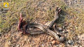 河岸放生水蛇,結果蛇都游上岸嚇壞民眾。(圖/翻攝自梨視頻)
