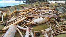 海邊撿拾漂流木?當心最重關七年