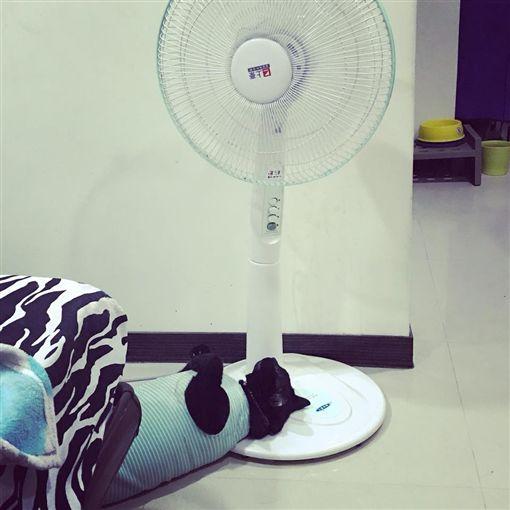家電,電風扇,故障,潤滑,橄欖油 圖/翻攝自臉書爆料公社