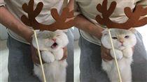 貓,聖誕節,麋鹿,魯道夫,喵星人,月曆(圖/翻攝自soonmoo_cat IG)