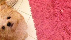 小狗,大便,愛心。(圖/翻攝自臉書粉專《9GAGCute》)