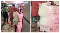 擔心弄髒腳ㄚ…薩摩耶坐小菜籃逛市場 白肉溢出讓人好想揉 圖/翻攝自微博