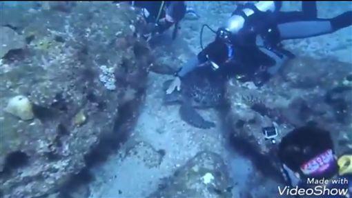 潛水客騷擾海龜、抓海蛇竟還錄影上傳 網友氣炸怒控虐待圖/翻攝自靠北潛水