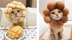 日本就有一個Instagram帳號「あみ」的網友常秀出他幫橘虎斑貓(Ran)打扮的照片,照片中Ran戴著不同食物(菠蘿麵包、波堤甜甜圈、吐司還是紅豆麵包)的羊毛氈頭套(圖/翻攝自《kibimomo》IG)