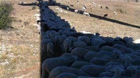 夏天,艷陽,防曬,綿羊,有趣,遮陽 圖/翻攝自臉書爆料公社