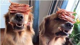 肉乾,忍耐,狗,汪星人,黃金獵犬,阿金 圖/翻攝自臉書