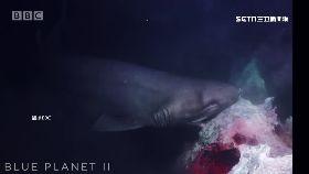 鯊咬潛水艇1800