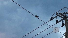 防松鼠  電線路障成玉里特殊街景(2