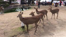 奈良鹿(圖/翻攝自推特)