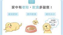 名家/毛起來/【高齡汪喵飲食】家中有老狗?飲食多留意!