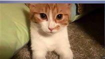 紐西蘭第一貓(圖/翻攝自YouTube)