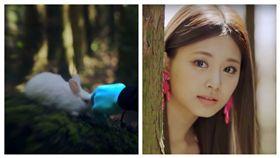 SIGNAL,周子瑜,兔子(合成圖/翻攝自TWICE 1001 YouTube)