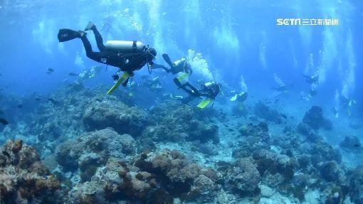 超扯潛水客! 強摟燕魚拍照 教練轟:魚鱗受損