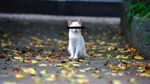 外遇日本殺人未感情挽回遂案 懷疑犯是一隻無家可歸在外流浪的貓咪