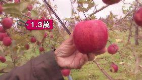 日天價蘋果1800