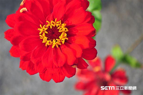花卉,拍攝技巧。(圖/部落客許傑提供)