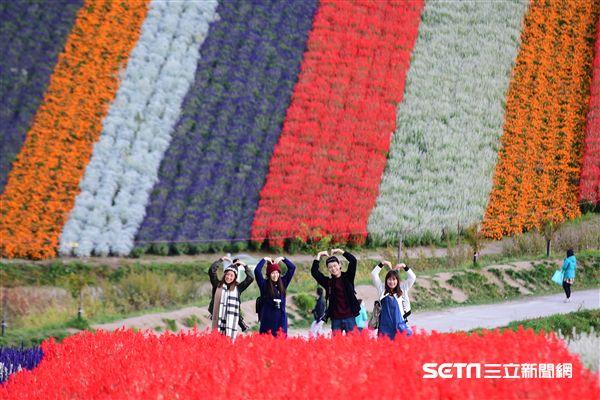 花卉,拍攝技巧,北海道四季彩之丘。(圖/部落客許傑提供)