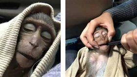 泰國曼谷濱水區有一隻長尾獼猴搶了遊客的咖啡,沒想到獼猴喝了幾口後就陷入昏迷達10小時。醫師表示,獼猴是因咖啡因過量才昏迷,牠恢復意識後已將他放回野外。(圖/翻攝自暹罗飛鳥微信)