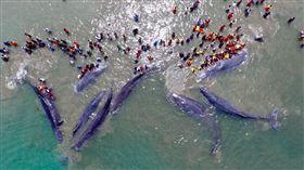 抹香鯨,鯨魚,集體,擱淺,WWF Indonesia,海灘,解剖,屍體 圖翻攝自Strandings Indonesia推特 https://goo.gl/KotcGH