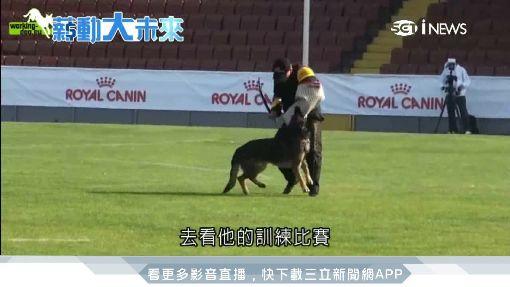 警犬訓練師眉角多 因材施教最重要