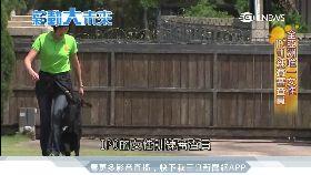 警犬IPO訓練 亞洲第一位女審查員