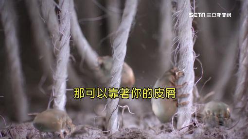 起床折棉被錯了嗎?層次越多越易生黴菌
