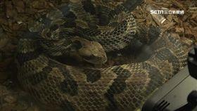 世界蛇王教育農場,蛇王,血清,響尾蛇,龜殼花,黃國男