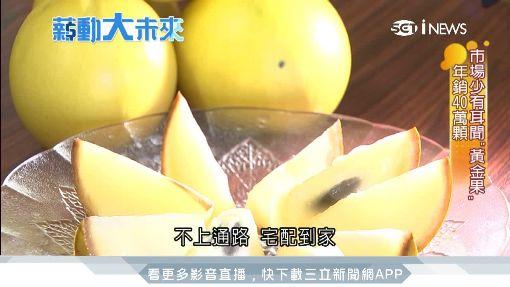 市場少有耳聞「黃金果」  年銷40萬顆 ID-1139398