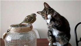 寵物,新奇,毛小孩,喵星人,貓,鳥 圖/翻攝自臉書