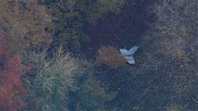 英國,直升機,飛行,飛機  https://twitter.com/itvnews/status/931608474898792448/photo/1?ref_src=twsrc%5Etfw&ref_url=http%3A%2F%2Fwww.news.com.au%2Ftravel%2Ftravel-updates%2Fincidents%2Fplane-and-helicopter-crash-