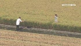 踩祕境稻田1200