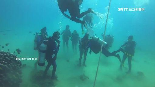 繩綁珊瑚礁餵魚潛水 業者挨批破壞生態
