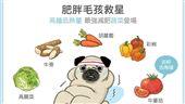名家/毛起來/肥胖毛孩救星!高纖低熱量~最強減肥蔬菜登場!