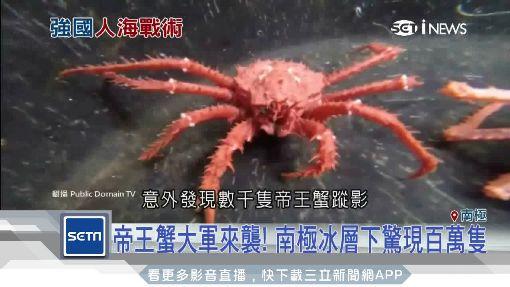 百萬帝王蟹侵南極! 中國網友:我們吃光它