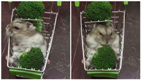 寵物,倉鼠,花椰菜,推車,貓(圖/翻攝自yutafamily IG)