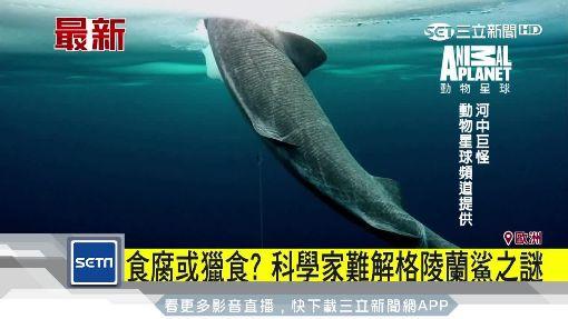 深海巨鯊罕見曝光 壽命可達400年
