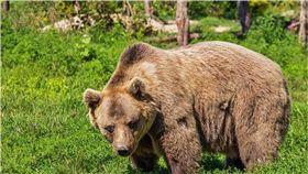 西伯利亞,熊,槍,獵人,俄羅斯,棕熊,偷竊 圖/pixabay