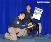 國防部發表國軍107年形象月曆,新北市警局警犬隊。(記者邱榮吉/攝影)